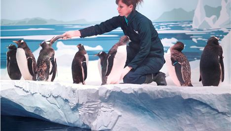 Penguins Land at the Sea Life Aquarium