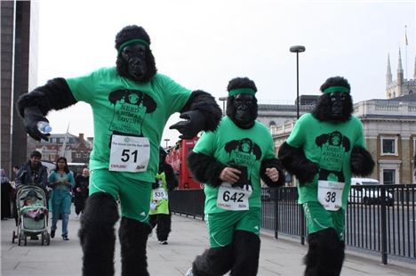 Great Gorilla Run2