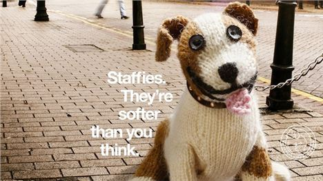 Staffie_Knit
